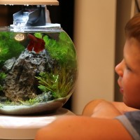Наступает момент, когда в жизни любой семьи, где подрастают маленькие детки, появляется потребность в создании живого уголка. Маленьким детям идет на пользу общение с представителями разнообразной фауны, будь то хомячки,...