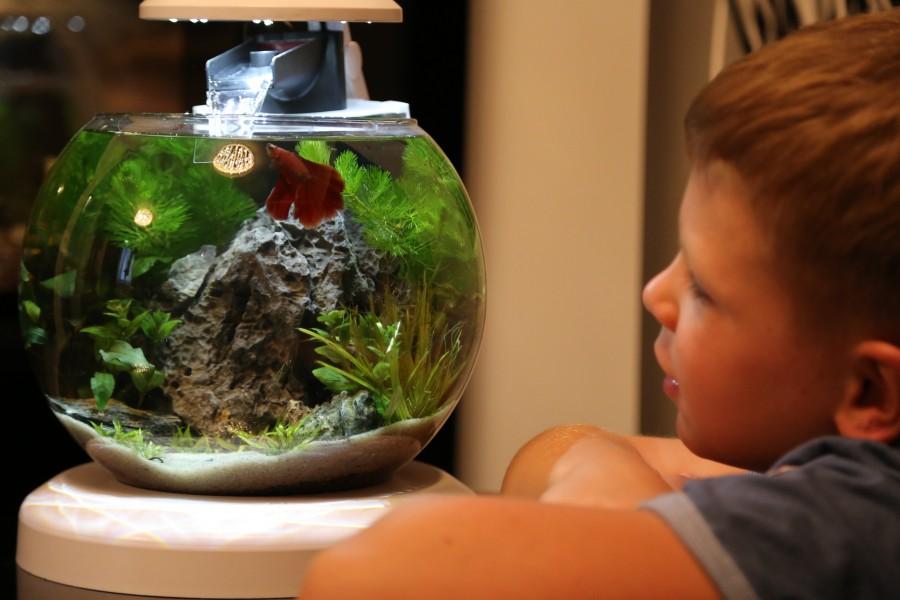 Аквариум в детской комнате – советы от профессионалов